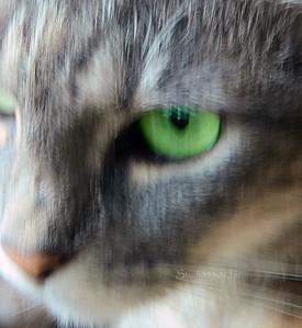 Cat eye 072311 80