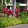 Hawaii-1776