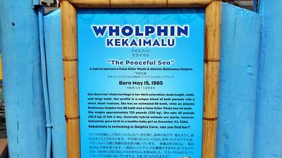 Sea Life Park on Oahu Hawaii March 2012