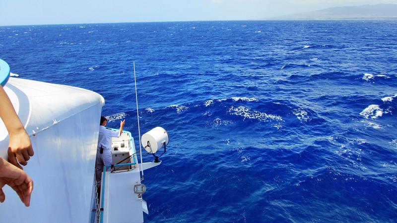 Star of Honolulu Whale Watch Cruise Hawaii March 2012