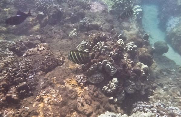 Maui-50