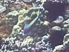 Maui-37