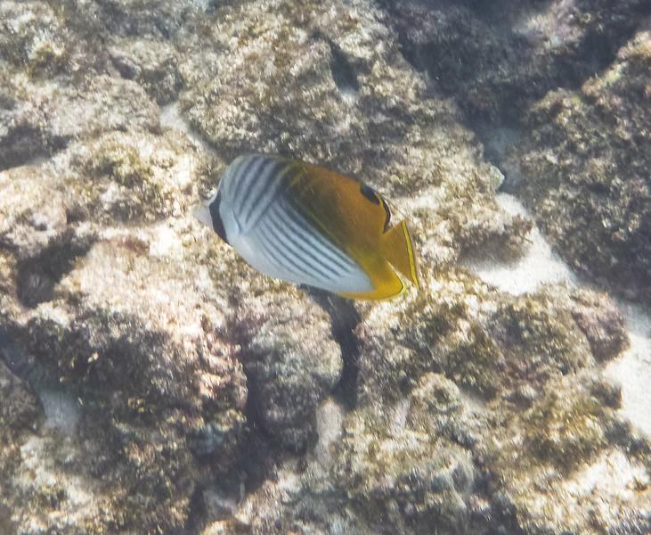 Maui-5