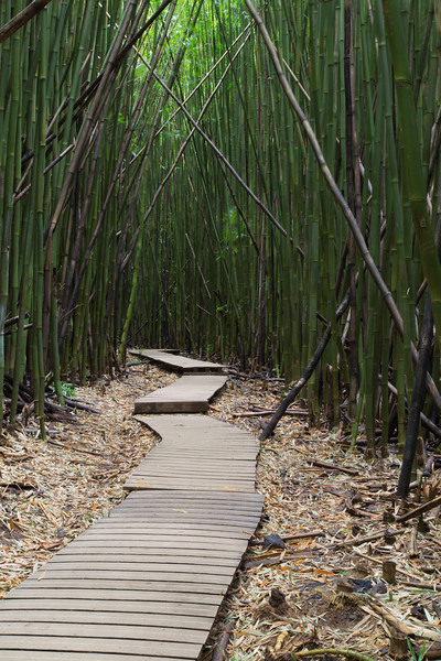 Bamboo Forest, Pipiwai Trail, Maui, Hawaii