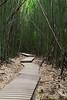 Bamboo Forest, Pipiwai Trail, Maui, Hawaii