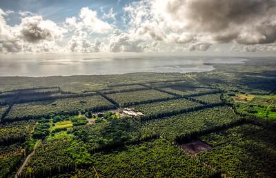 Mauna Loa macadamia farm