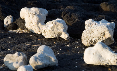 Some bits of dried coral on volcanic rocks at Pu'uhonua O Honaunau National Historic Park (City of Refuge) on the Big Island of Hawaii