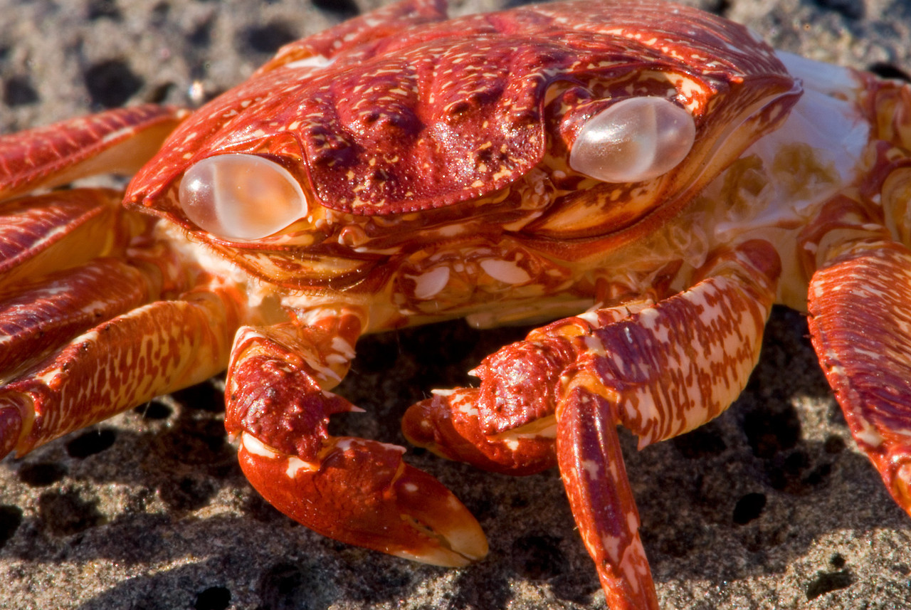 Used crab shell
