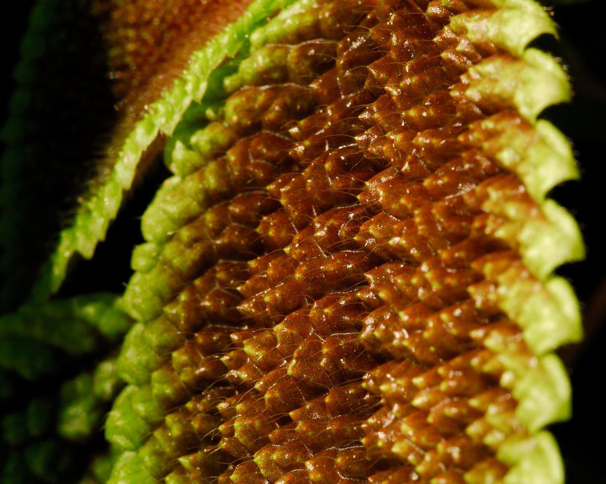 Textured leaf