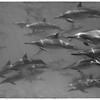 Dolphin Squad