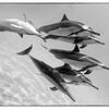 Dolphin Play 2