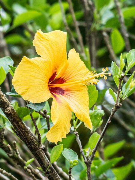 Hawaii-93