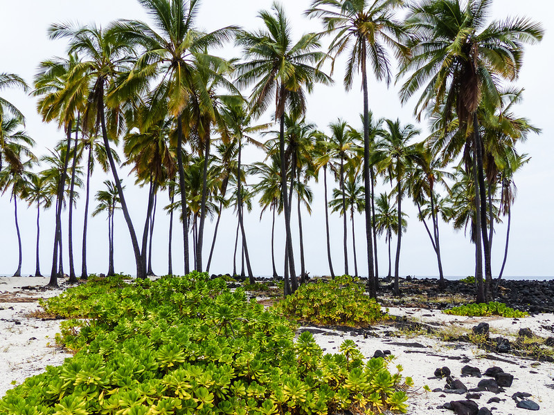 Hawaii-263