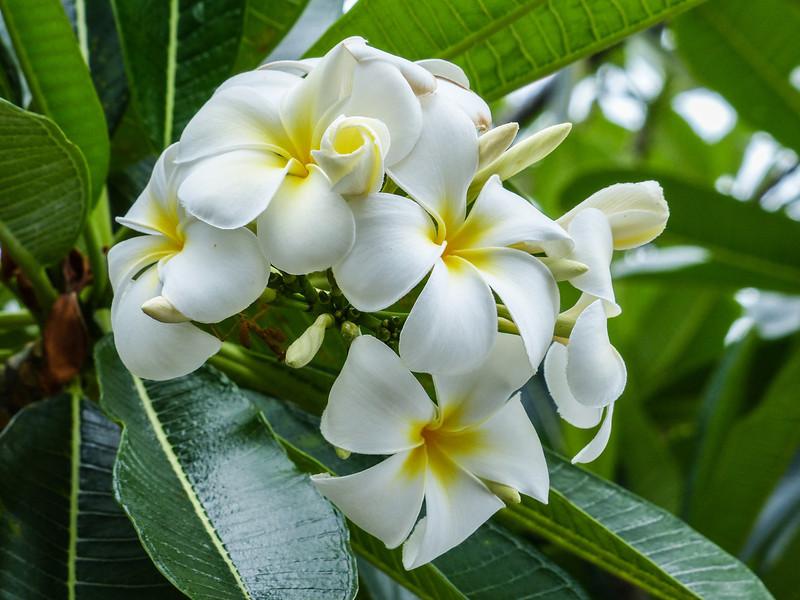 Hawaii-226