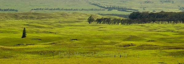 Mauna Kea Pasturelands = HOME