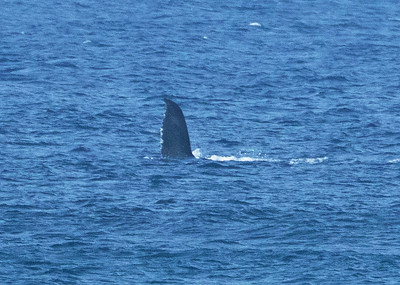 Humpback Whale Fin Flapping