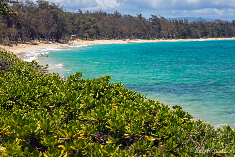 Kailua Beach with Ironwood Trees~2011