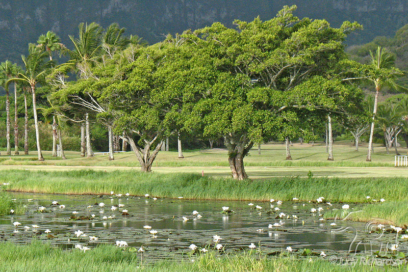Olomana Golf Course with Lily Pond in foreground