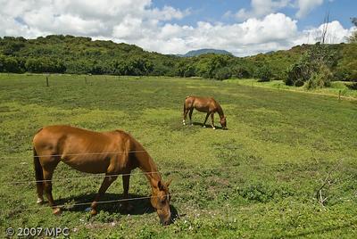 Horses_(1_of_1)