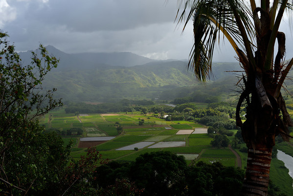 Fields Near Hanalei