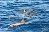 Spinner Dolphins Activity