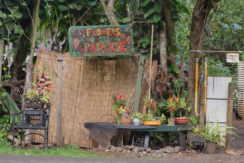 Roadside Stop, Kauai, Hawaii