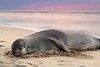 Hawaiian Monk Seal, Ke'e Beach, Kauai