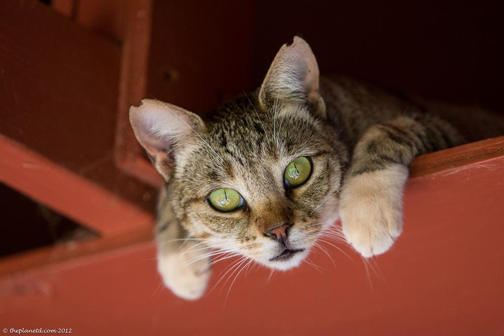 Lanai Cat Sanctuary in Hawaii