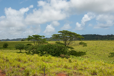 Open farmland south of Wailua River State Park.