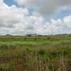 Open farmland south of Wailua River State Park.