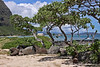 Windward Coast & Makai Pier through twisted trees