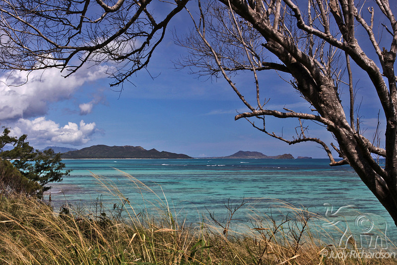 Windward Coast with beautiful colored water and coral heads framed by tree