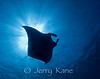Manta Ray (Manta alfredi) - Kaiwi Point, Big Island, Hawaii