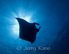 Manta Ray (Manta alfredi) - Kaiwi Point, Big Island, Hawaii