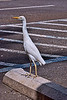 Egbert (Egberta?) the Egret