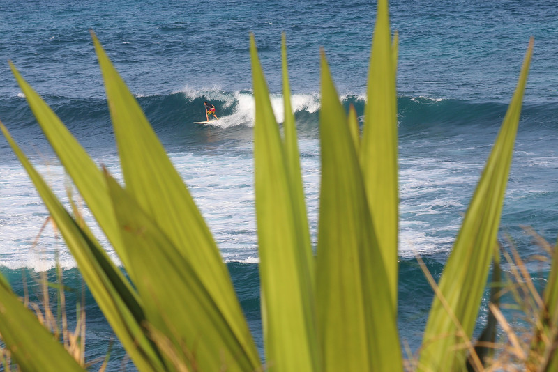 A surfer races down the line seen through the blades of an agave plant at Ho'okipa Beach Park, Maui