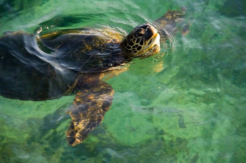 turtle gulp...