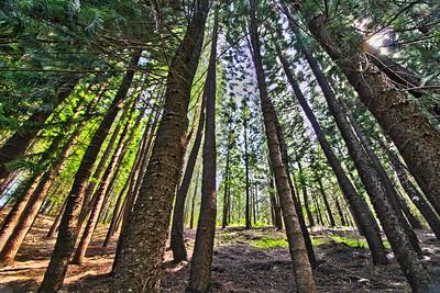 Forest, Waihee Ridge Trail