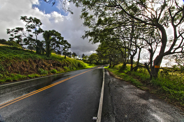 Wet Highway near Ulupalakua Ranch, Maui
