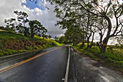 Wet Highway near Ulupalakua Ranch, Maui