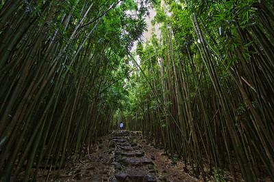 Bamboo Forest, Pipiwai Trail, Kipahulu, Maui
