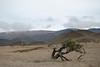 View of Mauna Kea's summit from the Mauna Kea Access Road. #KEA2009-3