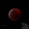 Super Blood Wolf Moon, Kailua, Hawai'i January 20, 2019