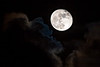 Full Moon~6-25/26-2021 ~ Strawberry Moon