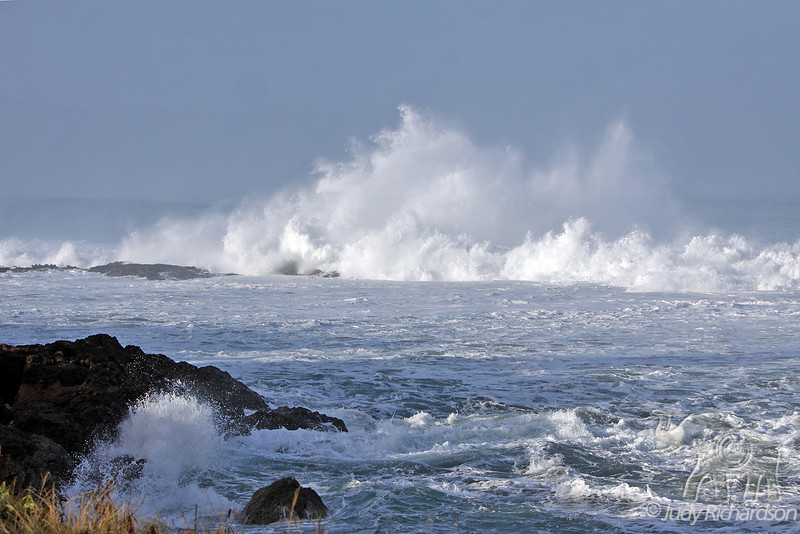 "Thunderous action at entrance to Shark's Cove~These ""waves"" could be seen from Waimea Bay~visible over the tops of trees."