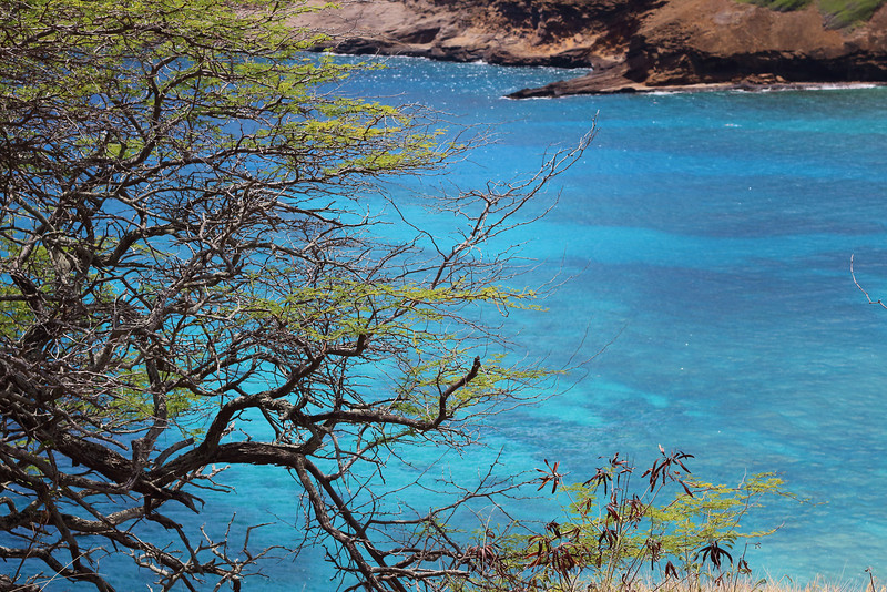 Tropical shades of blue