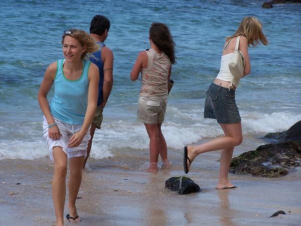 Beach wild life,