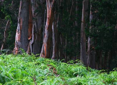 Tree wall on Aiea loop trail