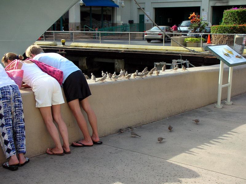 72. Feeding Honolulu Harbor Fish & Birds.JPG