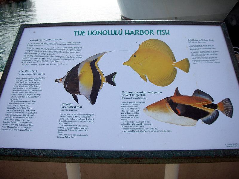 67. Feeding Honolulu Harbor Fish & Birds.JPG